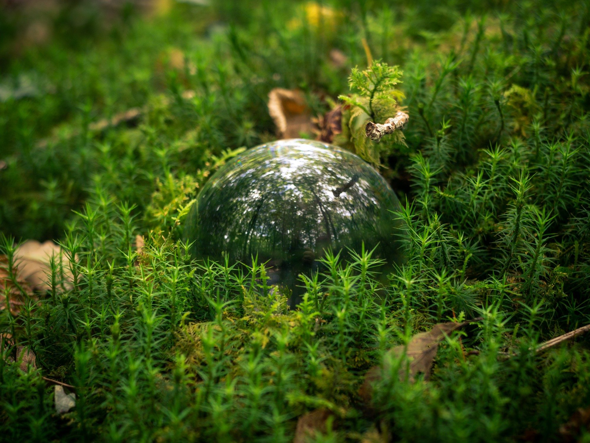 Forêt de Brocéliande - Lensball Bretagne, France