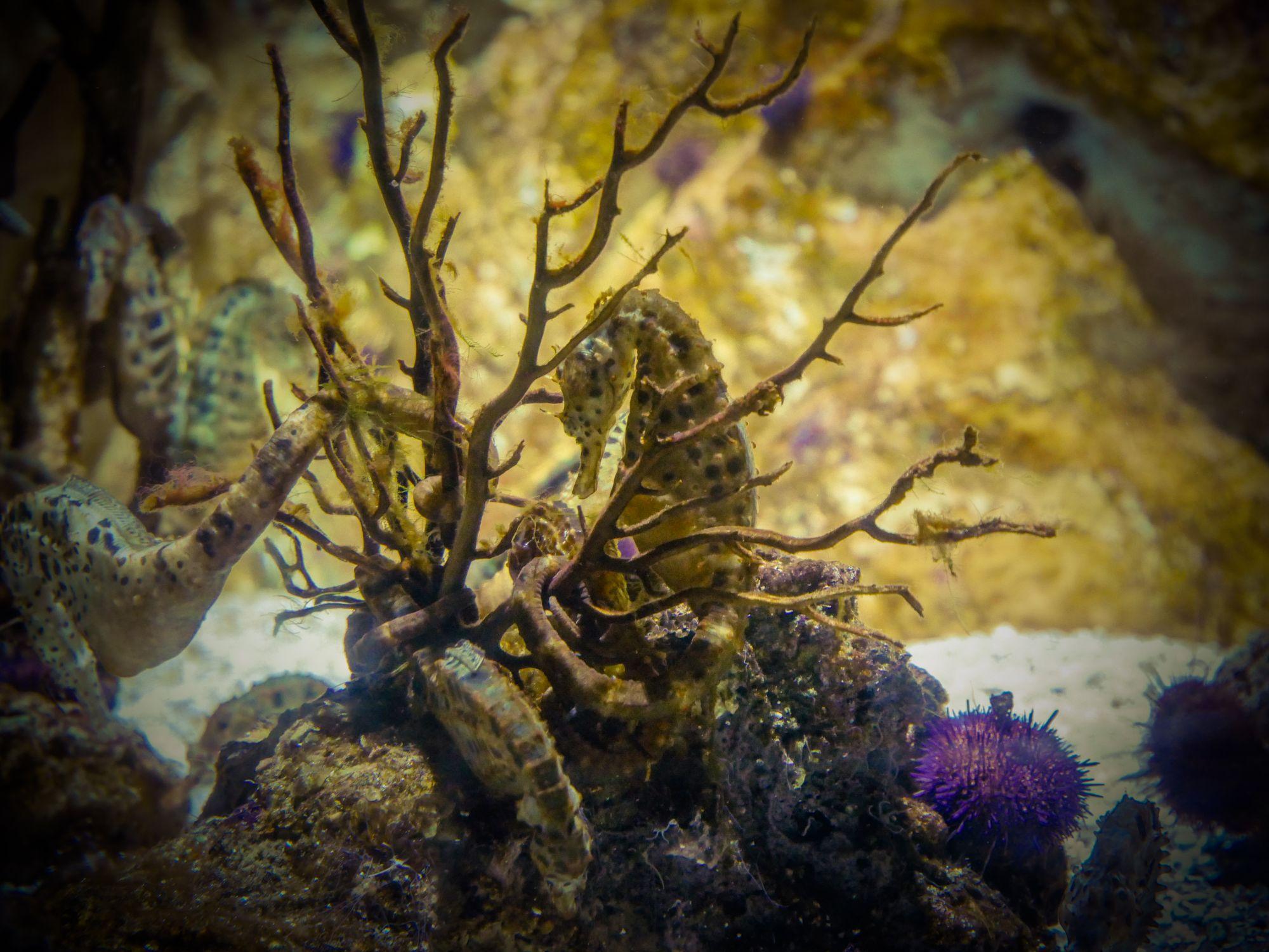 Hippocampe, Aquarium de La Rochelle - Vacances d'été à La Rochelle