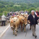 Accueil de la transhumance au camping Bellerive en Aveyron