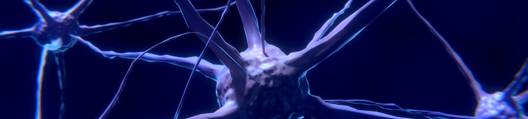 training neuro-sensoriel