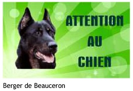 Berger de Beauceron
