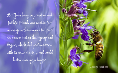Perfume of hyssop and thyme